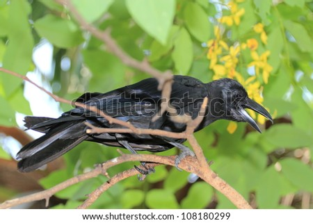 raven on tree - stock photo