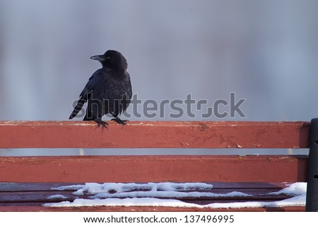 raven standing on a bench in the winter. - stock photo
