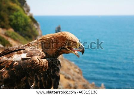 ravenous eagle - stock photo