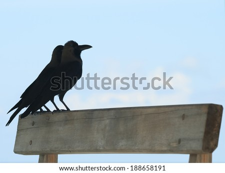 ravens against the sky, Maldives - stock photo