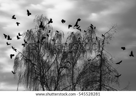 Ravens on depressive dramatic winter sky.
