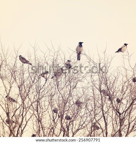 Ravens on the tree branch.Special toned photo in vintage style - stock photo