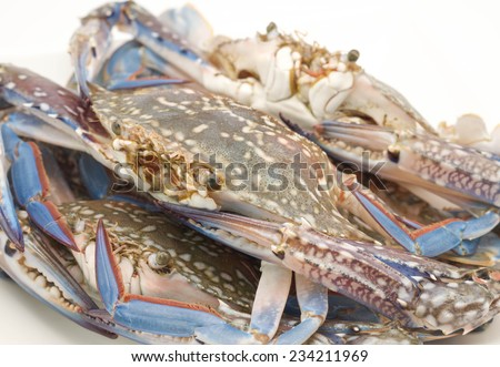 Raw and fresh of uncooked crabs for seafood meal with delicious taste on white background - stock photo