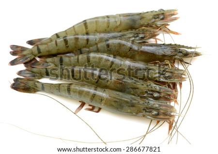 Raw black tiger shrimp isolated on white background - stock photo