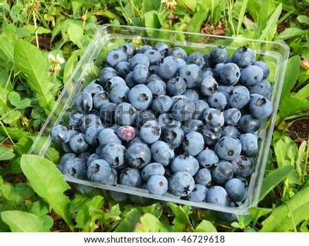 Raw blueberries in a basket