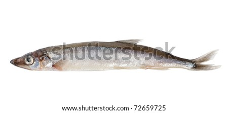 Raw capelin isolated on a white background (Path)
