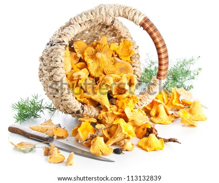 Raw chanterelles in basket on white background