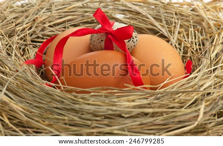 Raw eggs in a birds nest with feathers close-up - stock photo