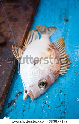 raw fish with hook on the fishing boat