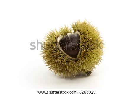 raw,fresh chestnut-close up - stock photo