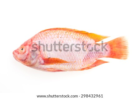 Raw fresh fish isolated on white background - stock photo