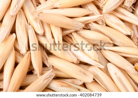 raw grains of oats close up as a background macro - stock photo