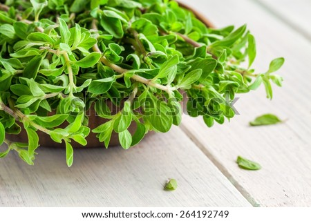 raw green herb marjoram in the bowl on a white wooden rustic table - stock photo