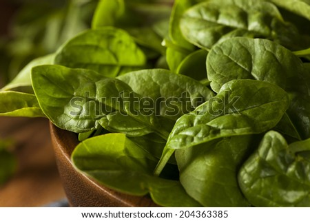 Raw Green Organic Baby Spinach in a Bowl - stock photo