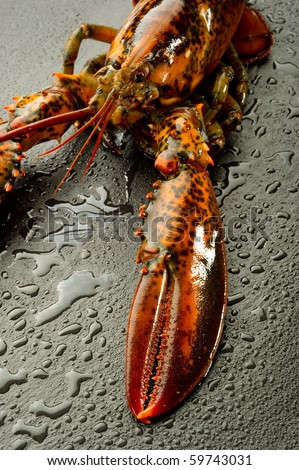 raw lobster over black stone - stock photo