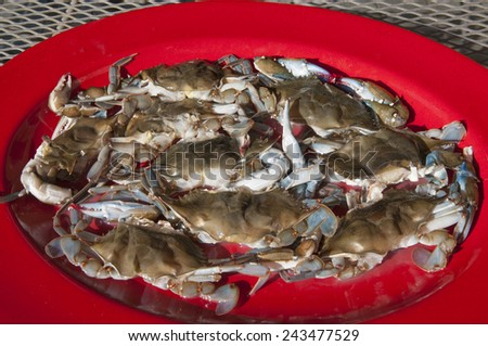 Raw Maryland soft-shelled blue crabs on a platter - stock photo