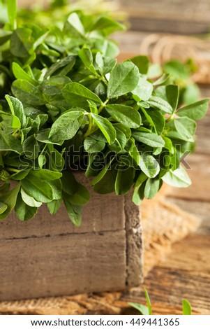 Raw Organic Fenugreek Methi Leaves in a Basket - stock photo