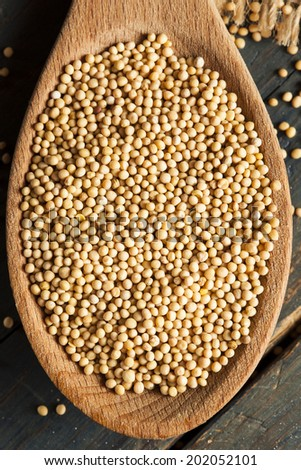 Raw Organic Mustard Seeds in a Spoon - stock photo