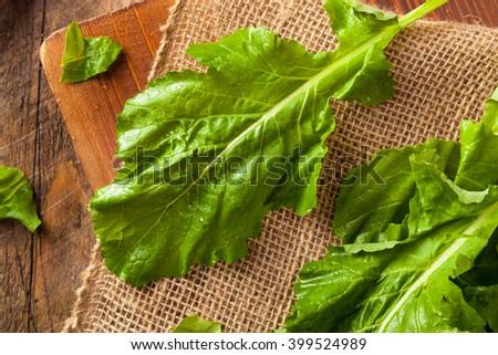 Raw Organic Turnip Greens Ready to Eat - stock photo