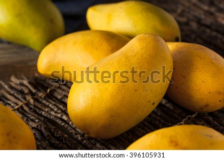 Raw Organic Yellow Mangos Ready to Eat - stock photo