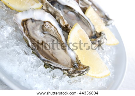 raw oysters with lemon and ice - stock photo