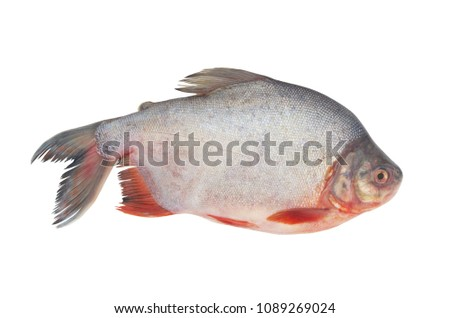 stock-photo-raw-pacu-fish-isolated-on-wh