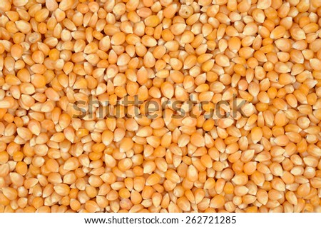 Raw popcorn surface texture top view. Close up. - stock photo