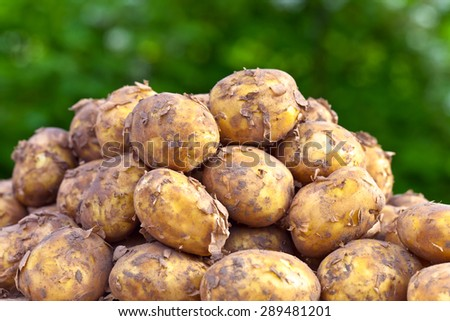 raw potatoes on a wooden table - stock photo