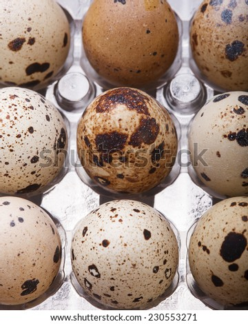 raw quail eggs closeup in plastic packaging - stock photo