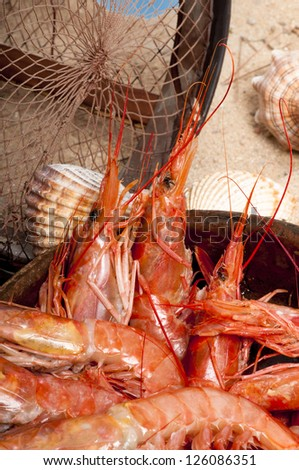 Raw red prawns with a maritime background of sand, seashells, a driftwood board and a crab pot.