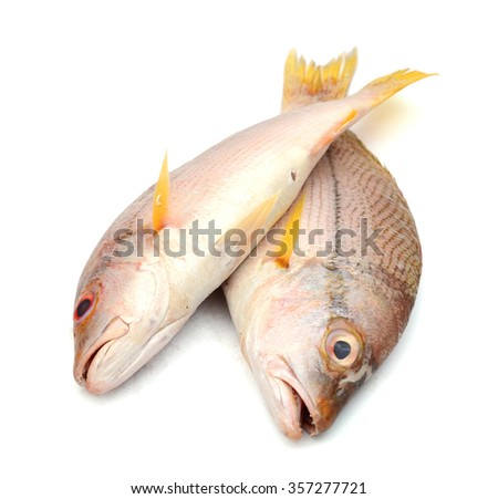 raw red snapper fish isolated on white  - stock photo