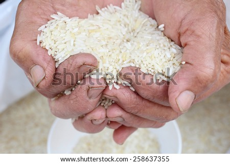 Raw rice grain with hands - stock photo