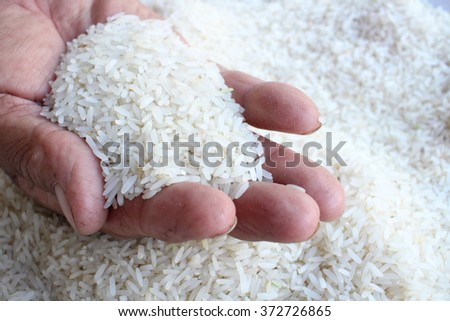 Raw rice grain with hands