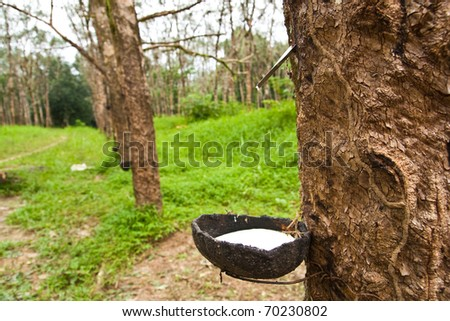 Raw rubber before sending in process. - stock photo