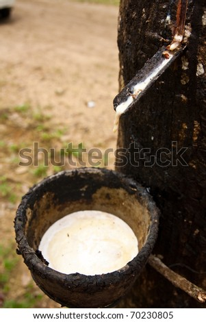 Raw rubber in the rubber cup. - stock photo