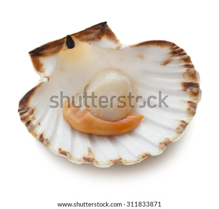 Raw scallop on white background - stock photo