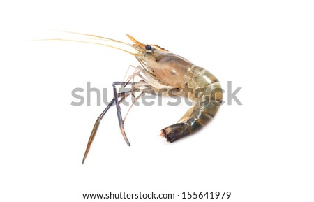 Raw Shrimp isolated on the wihte background