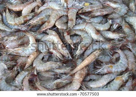 Raw shrimps close up - stock photo