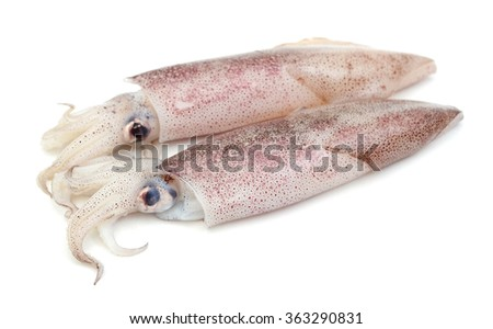 raw squids on white background  - stock photo