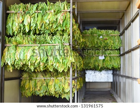 raw tobacco leaf in stove factory - stock photo