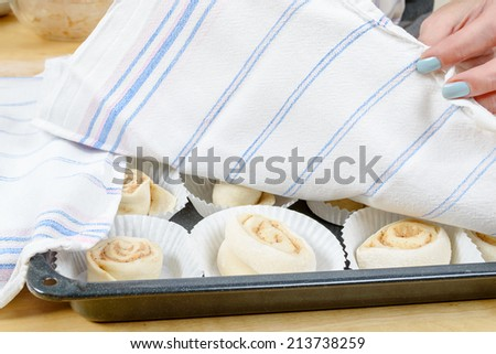 Raw, unbaked cinnamon buns resting under kitchen towel before baking. - stock photo