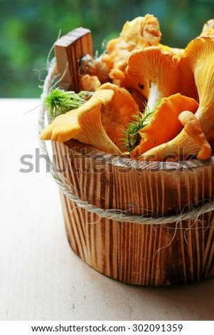 Raw wild mushrooms chanterelle in wooden bucket