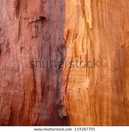 Raw wood - stock photo