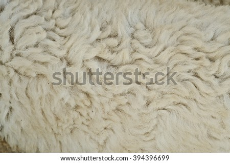 raw wool sheep texture - stock photo