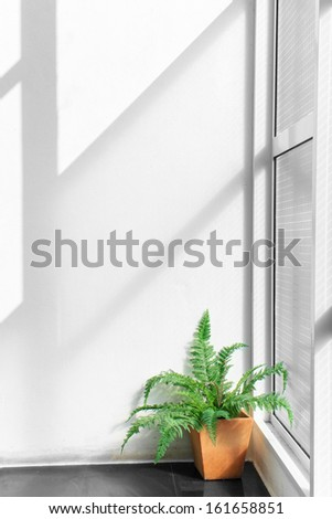 Ray and light shade on indoor white wall - stock photo