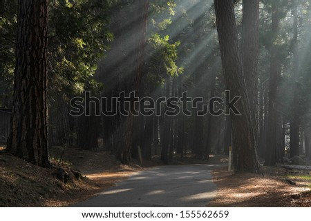 Ray of light passing through the trees on the road early morning - stock photo