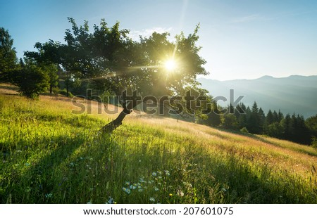 Rays in tree during sunrise. Beautiful natural landscape - stock photo