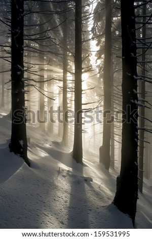 Rays in winter forest - stock photo