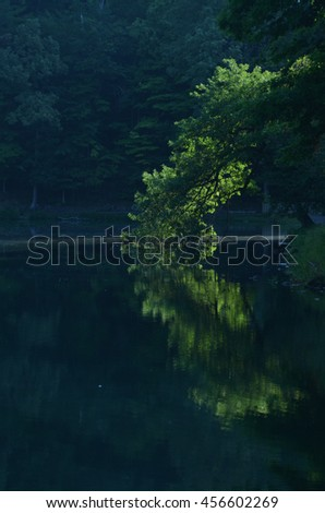 rays of early morning sunlight illuminates a green tree leaning over a pond reflected in the dark water