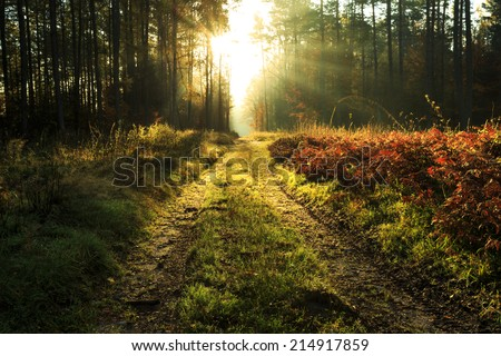 Rays of light in north Poland - stock photo